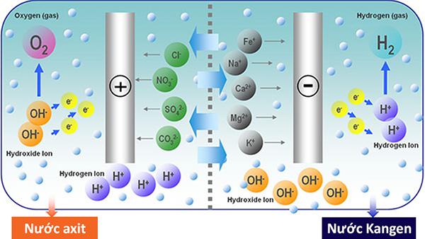 Máy Kangen K8, Máy kangen K8 tạo ra những lợi ích gì trong hỗ trợ điều trị bệnh, Nhà phân phối máy lọc nước ion kiềm số 1 Việt Nam | Vitamia