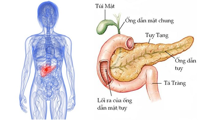 , Sốc với những nguyên nhân chính gây bệnh tiểu đường, Nhà phân phối máy lọc nước ion kiềm số 1 Việt Nam | Vitamia