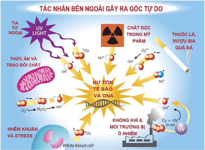 Gốc tự do là gì, Gốc tự do là gì? Cần làm gì để ngăn chặn gốc tự do?, Nhà phân phối máy lọc nước ion kiềm số 1 Việt Nam | Vitamia