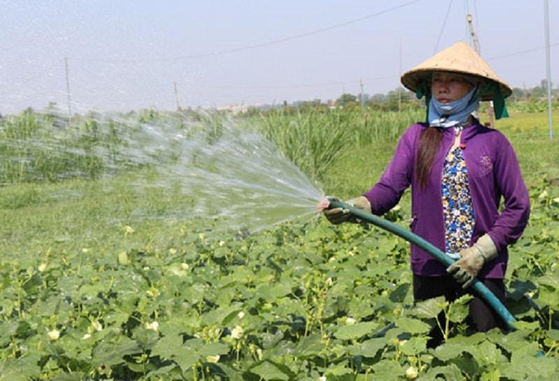 Thành phần không thể thiếu trong sản xuất nông nghiệp