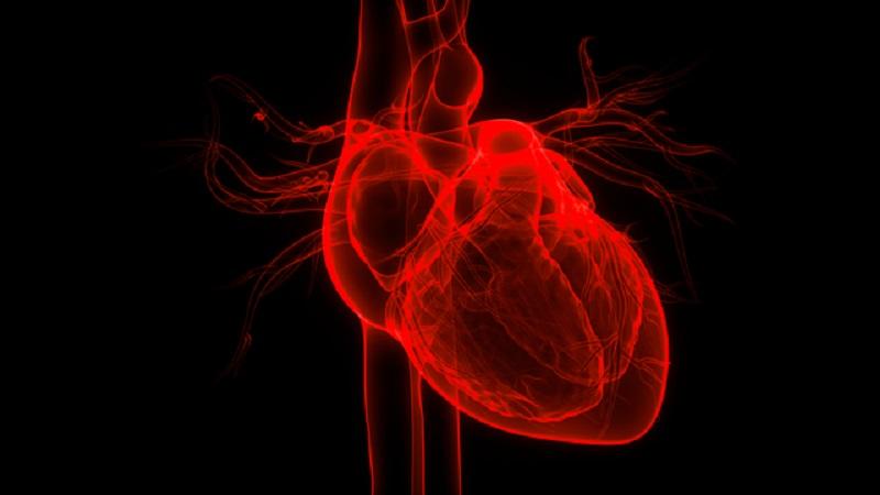 Chất chống oxy hóa rất quan trọng đối với sức khỏe tim mạch.