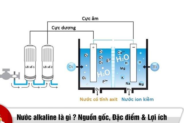 Nguồn gốc xuất xứ của Alkaline